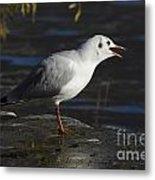 Talking Bird Metal Print