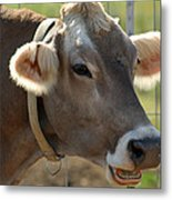 Talking Cow Metal Print