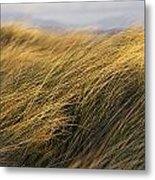 Tall Grass Blowing In The Wind Metal Print