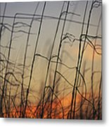 Tall Grasses Blowing In The Wind Metal Print