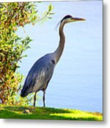 Tall Grey Heron Metal Print