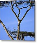 Tall Serengeti Tree And Baboon Metal Print