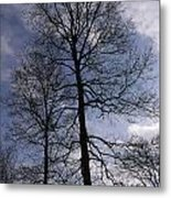 Tall Silhouetted Trees Metal Print