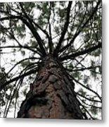 Tall Tree Metal Print