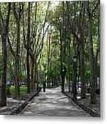Tall Trees Of Madrid Metal Print
