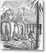 Taming Wild Elephants Metal Print