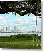 Tampa Skyline Through Old Oak Metal Print