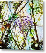 Tangled Wisteria Metal Print by Andee Design
