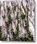 Tasseled Sugarcane Metal Print