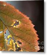 Tattered Leaf Metal Print