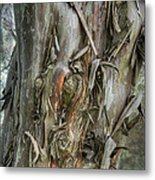 Tattered Tree Metal Print