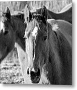 Taylor Horses Metal Print
