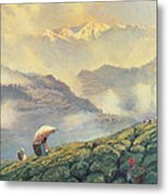 Tea Picking - Darjeeling - India Metal Print