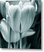 Teal Luminous Tulip Flowers Metal Print