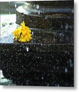 Tears On Cempasuchil Metal Print