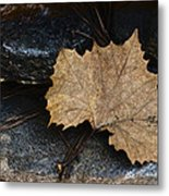 Tears To Fall Metal Print