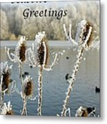 Teasel With Frost Metal Print
