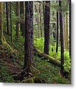 Temperate Rain Forest, Carmanah-walbran Metal Print