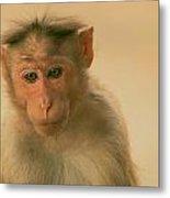 Temple Monkey Metal Print