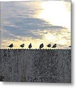 Ten Seagulls Stand On Top Of Stucco Wall Metal Print
