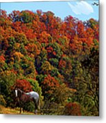 Tennessee Fall Metal Print