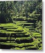 Terraced Rice Fields On Bali Island Metal Print