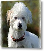 Terrier Dog Portrait Metal Print