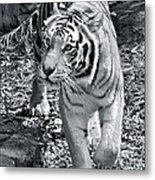 Terrific Tiger Metal Print