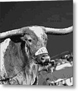 Texas Bevo Bw15 Metal Print