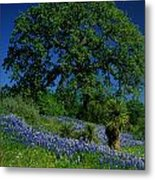 Texas Hill Country Metal Print