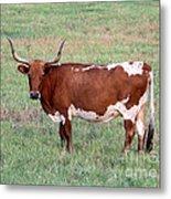 Texas Longhorn Metal Print