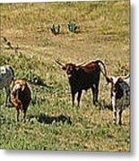 Texas Longhorns Panoramic Metal Print