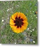 Texas Wildflower Metal Print