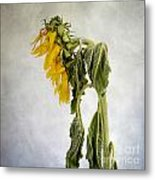 Textured Sunflower Metal Print by Bernard Jaubert