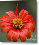Thai Flower In Glorious Orange #2 Metal Print