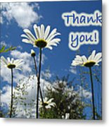 Thank You Greeting Card - Oxeye Daisy Wildflowers Metal Print