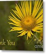 Thank You Yellow Aster Metal Print