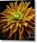 thank you Zinnia Flower Metal Print