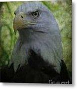 The American Bald Eagle - Lee Dos Santos Metal Print