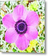 The Anemone Is So Pink Metal Print