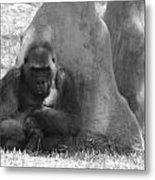 The Angry Ape In Black And White Metal Print