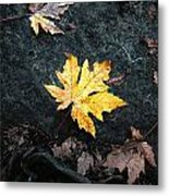 The Autumn Leaf Metal Print