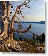 The Banks Of Crater Lake Metal Print