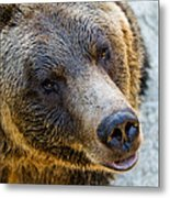 The Bear Head Shoot Metal Print