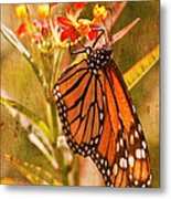 The Beauty Of A Butterfly Metal Print