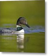 The Beauty Of A Common Loon Metal Print