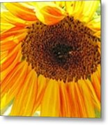 The Beauty Of A Sunflower Metal Print