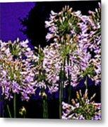 The Beauty Of Flowering Garlic Metal Print