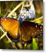 The Beauty Of The Queen  Metal Print