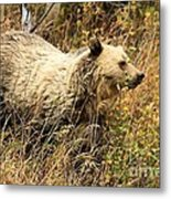 The Berry Hunter Metal Print
